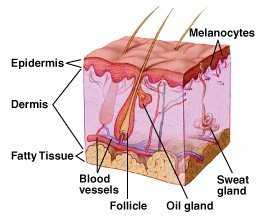 what causes moles to form on the body